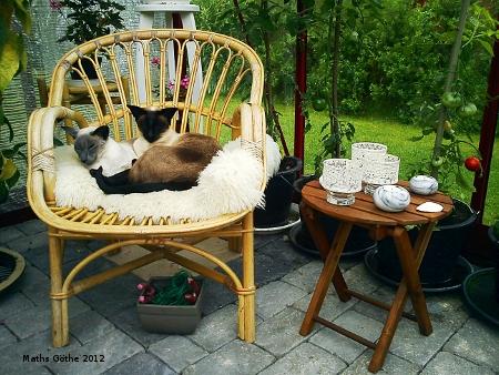 Två vilande katter